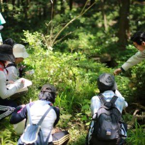 森のようちえん指導者スキルアップ(救急法&有毒植物)