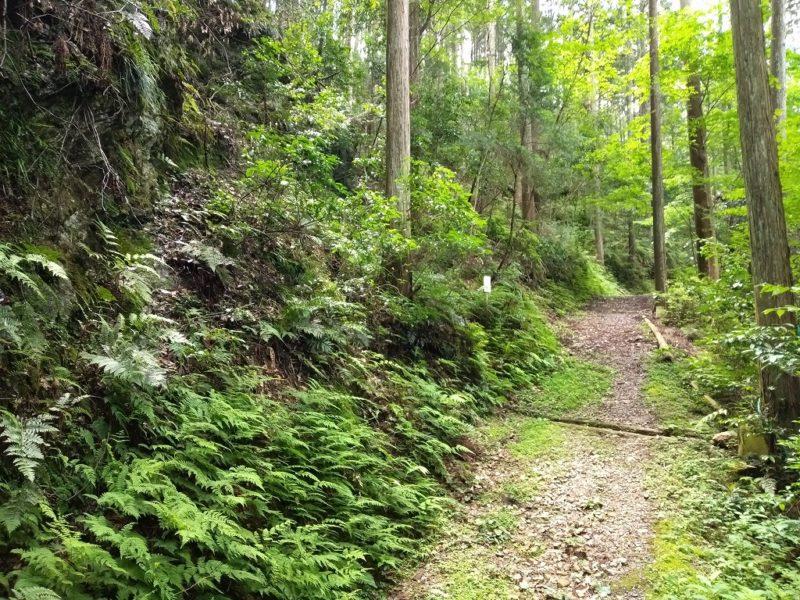 未舗装路の演習林内