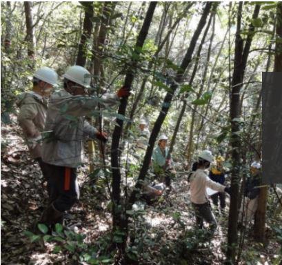 ヘルメットをかぶりノコギリを手にもち小さな直径の木を伐る参加者たち
