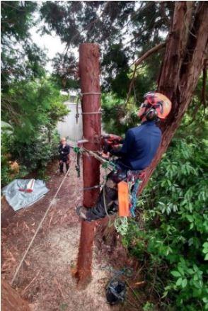 ロープを使って木の幹にのぼる(ぶりなわ)