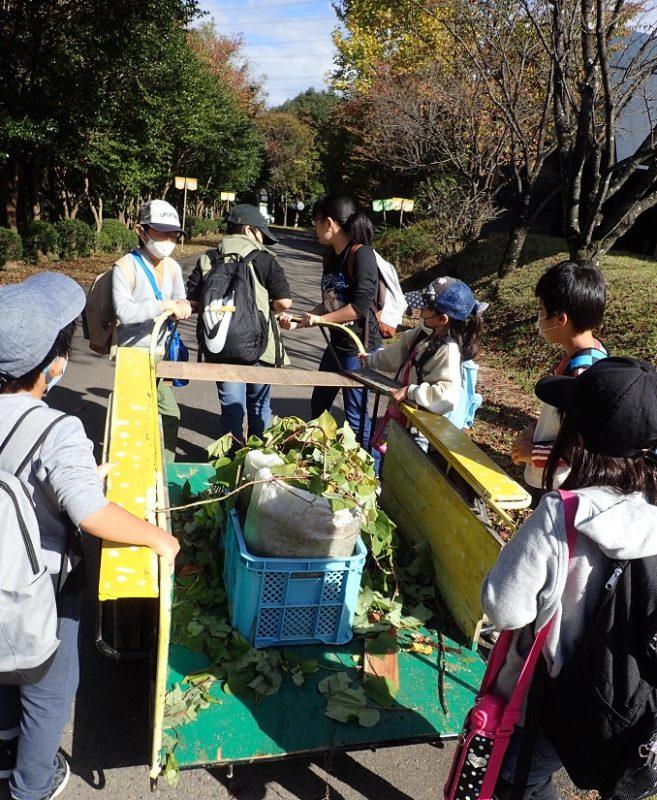 ツリークライミングする前に、全員でジリさんの育てたサツマイモ苗を運搬
