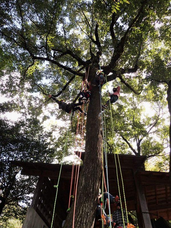 男子チームが樹上でポーズ