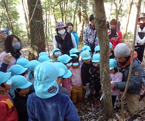 手鋸で立ち枯れ木を切る園児たち