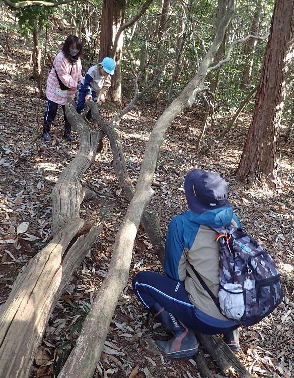 クリの枯れ木でシーソーする園児と先生