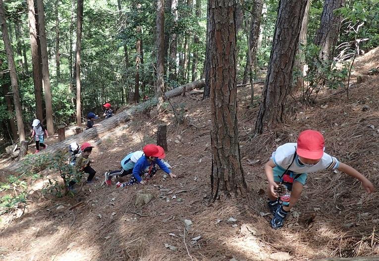 イノシシコースを登る園児たち