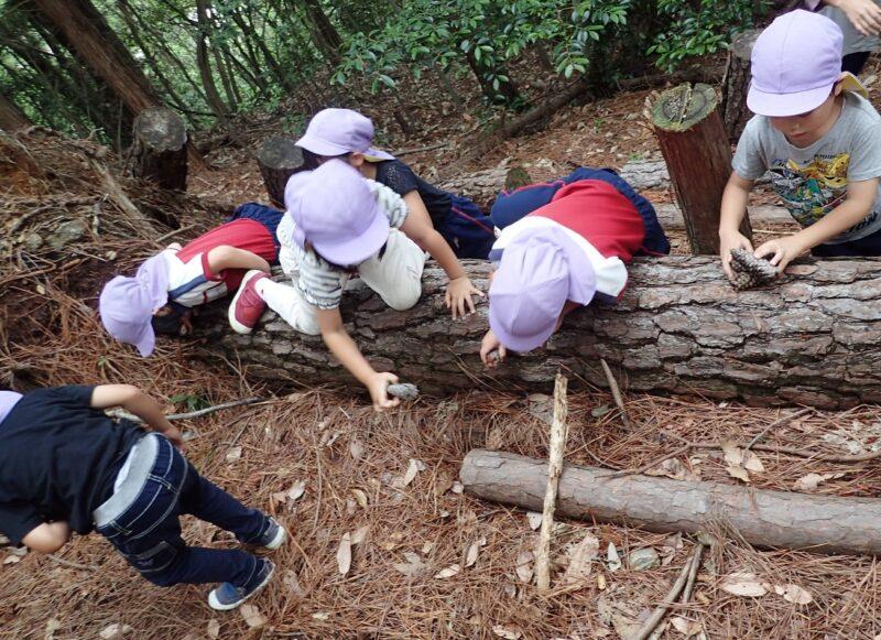 マツの倒木を乗り越える旭ヶ丘幼稚園のみんな