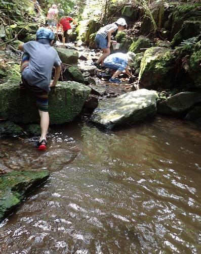 渓流でサワガニを探す子どもたち