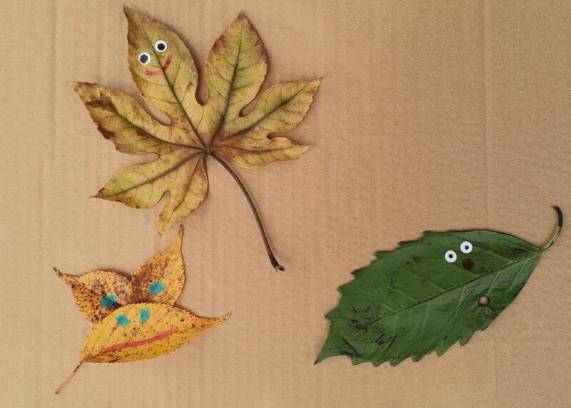 3種の葉の生き物